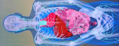 Virtuellt anatomibord