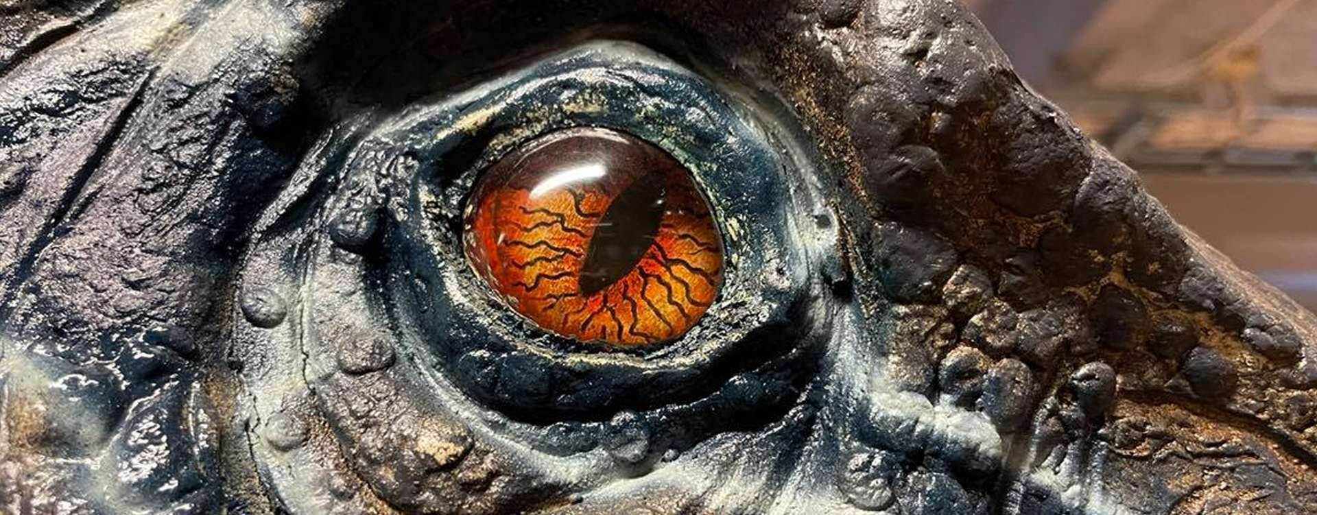 Närbild på dinosaurieöga